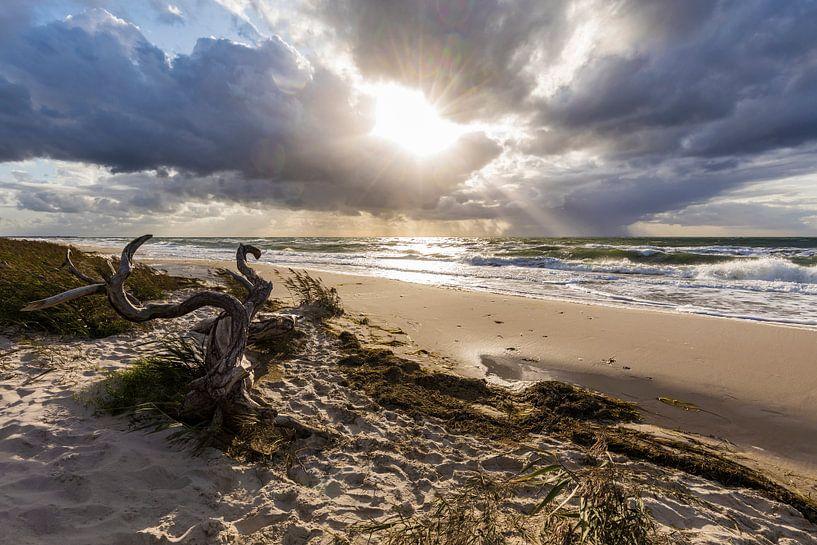 Darßer Weststrand an der Ostsee bei Sturm von Werner Dieterich