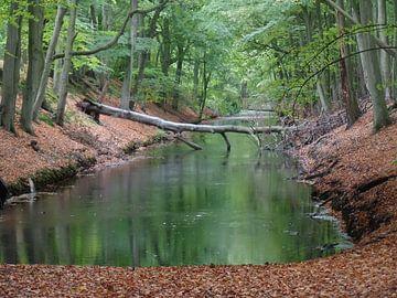 Kanaal met dode boom in park van