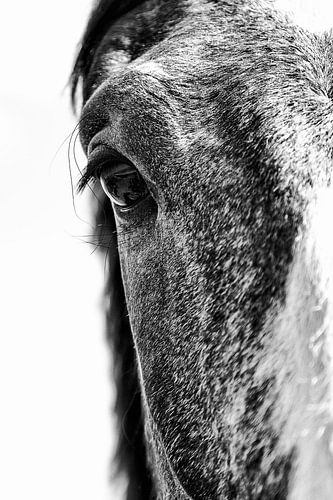 paardenportret in zwart-wit