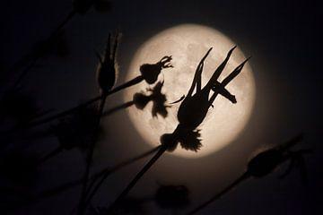 Full Moon fever #3 von Dennis Claessens