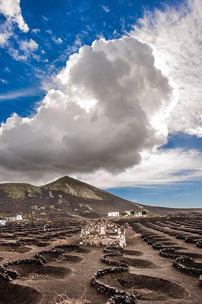 Wijngaard in de streek La Geria op Lanzarote, Canarische Eilanden. van Harrie Muis