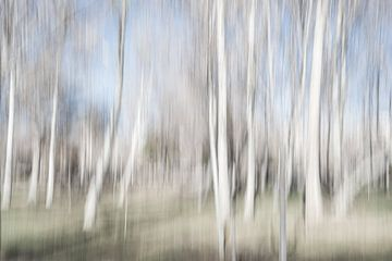 Birke in Bewegung im Herbst in einem Park | Iran von Photolovers reisfotografie