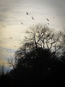 Vogels in ondergaande zon