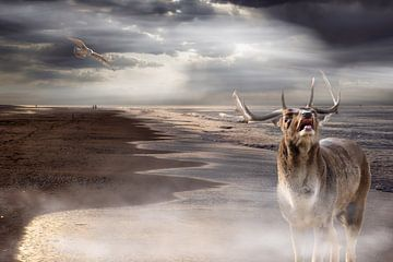 Hirsche am Meer von Carla van Zomeren
