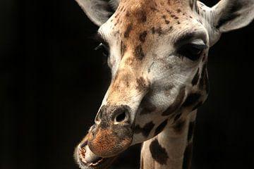 Giraffe van Saskia Hoks