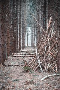 Blick durch den Wald von Steven Luchtmeijer