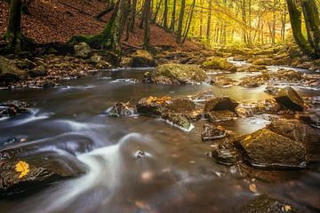 Herbst am Fluss von Peter Poppe