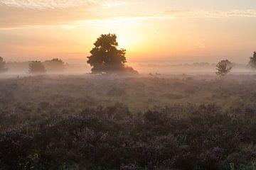 Zonsopgang boven de Heide van Peter Hooijmeijer