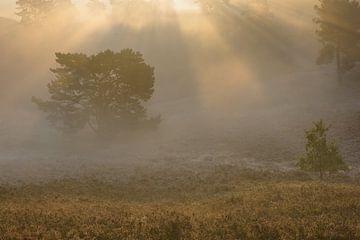 Rijp, mist en tegenlicht van Francois Debets