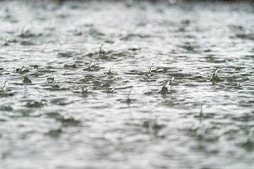 Regen van Eva Fontijn
