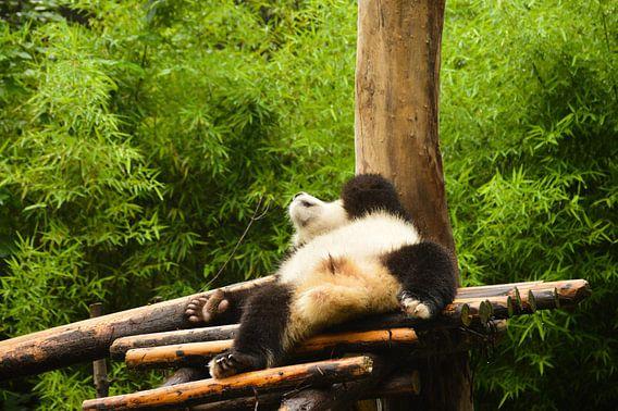 It's Panda relax time van Zoe Vondenhoff