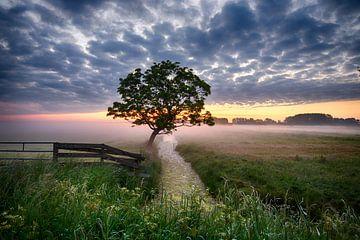 Einzelner Baum ii von Mario Bentvelsen