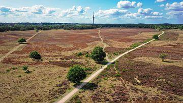 Hilversum Heathland von Frank Maters