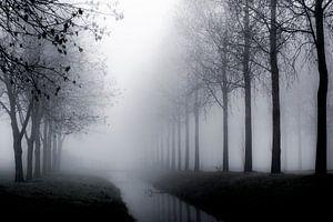 Bomen in de mist - Mistige taferelen