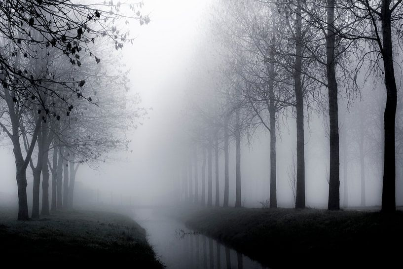 Bomen in de mist - Mistige taferelen von Rouzbeh Tahmassian