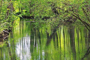grüner Fluss van Susanne Bauernfeind