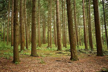 Veel bomen van Wendy Klaver