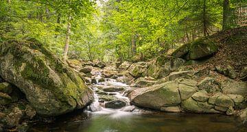 Ruisseau romantique dans le parc national du Harz sur Tobias Luxberg