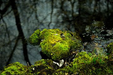 Mit leuchtend grünem Moos bewachsener Stein in einem Teich mit dunklem Wasser von Hans-Heinrich Runge