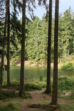 natuurgebied de harz in duitsland van Compuinfoto .