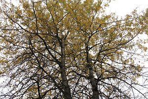 De herfst in volle glorie van Kim van der Lee