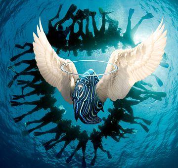 angel fish van Dray van Beeck