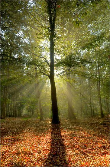 Goodmorning Sunshine! van Hans Kool