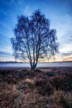 Baum in der Hoorneboegse Heide von Connie de Graaf
