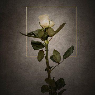 Elegante weiße Rose | Vintage-Stil gold von Melanie Viola