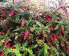 FlowerPower Fantasy 32 van MoArt (Maurice Heuts) thumbnail