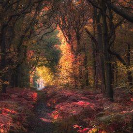Autumn forest sur Reinier Snijders