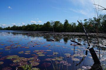 Natur in den Niederlanden Wasser von Martine Overkamp-Hovenga