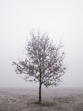 Eenzame boom van Jakub Wencek