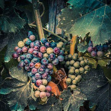Druiven van Irene Vroon