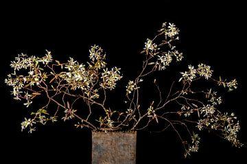 Blüte des Johannisbeerbaums von Hanneke Luit
