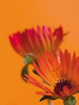 Fleur II - bloemen van