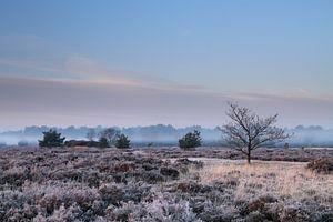 Een met ochtenddauw bedekt heideveld wordt onthuld als de mist optrekt