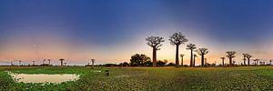 Baobab 360 panorama van