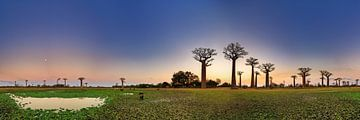 Baobab 360 panorama van Dennis van de Water