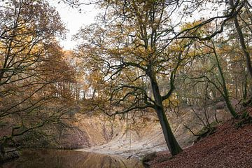 Mooi Limburg, meandere beek in Leudal met eikeboom in landschap van Ger Beekes