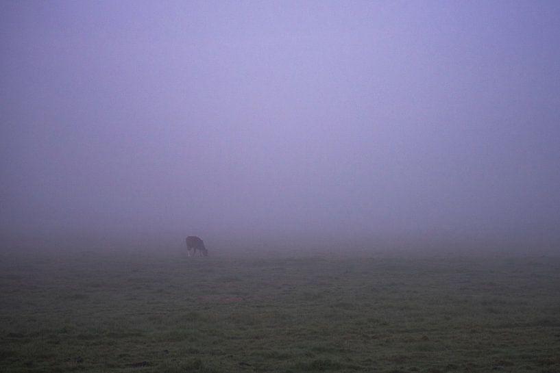 Eenzame koe in de vroege ochtend mist in Groningen/Drenthe van Hessel de Jong