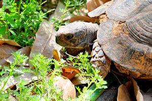 Green turtle van