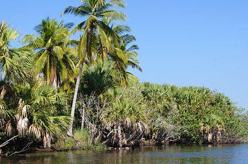 Palmbomen in de mangrove van Jadzia Klimkiewicz