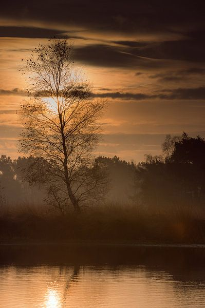 Einsame Birke mit Sonnenaufgang von Bjorn Dockx