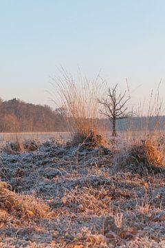 Leersumsevel boom tussen  von Eelke Cooiman