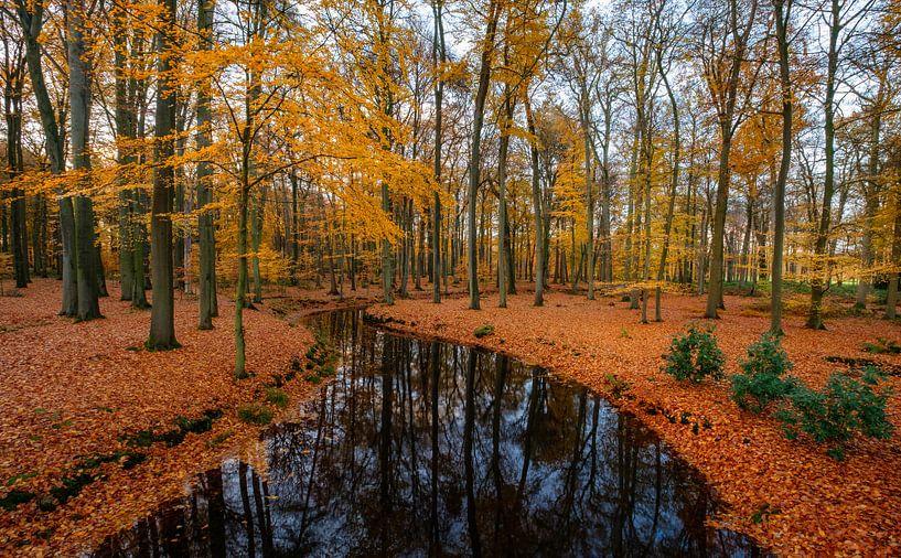 River through autumn van Mario Visser