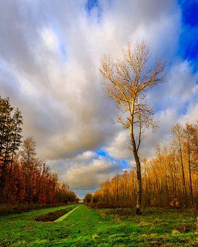 Eenzame boom van René Holtslag