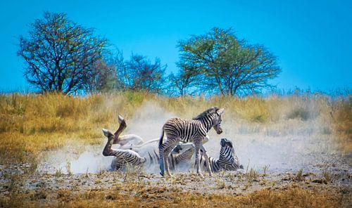 Zebra moeder demonstreert de wasbeurt