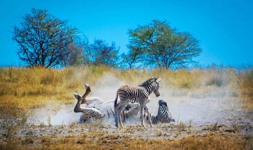 Zebra moeder demonstreert de wasbeurt van Rietje Bulthuis