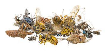 Viele verschieden tote Insekten liegen auf einem Haufen. Freigestellt auf weiß  on white von Hans-Jürgen Janda